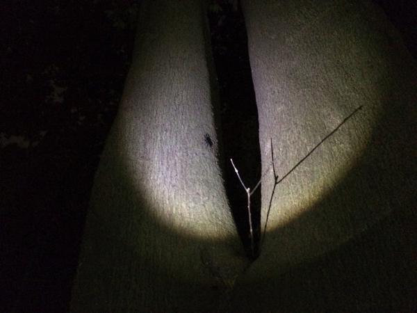 木の上にはクワガタらしき姿が!