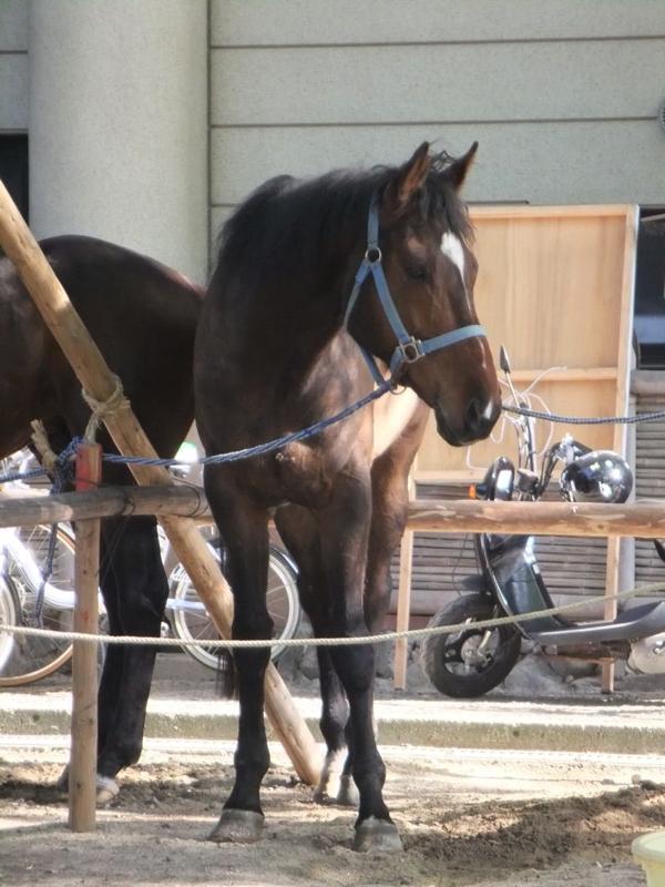 馬を撮影する時は慎重に!