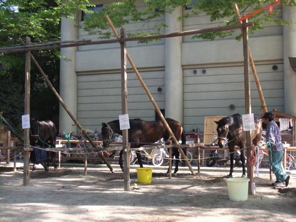 待機中の馬たち