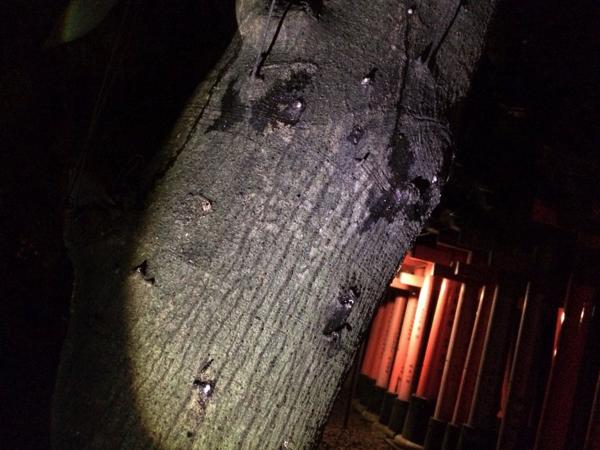 まわりの木は天然の樹液がダラダラ
