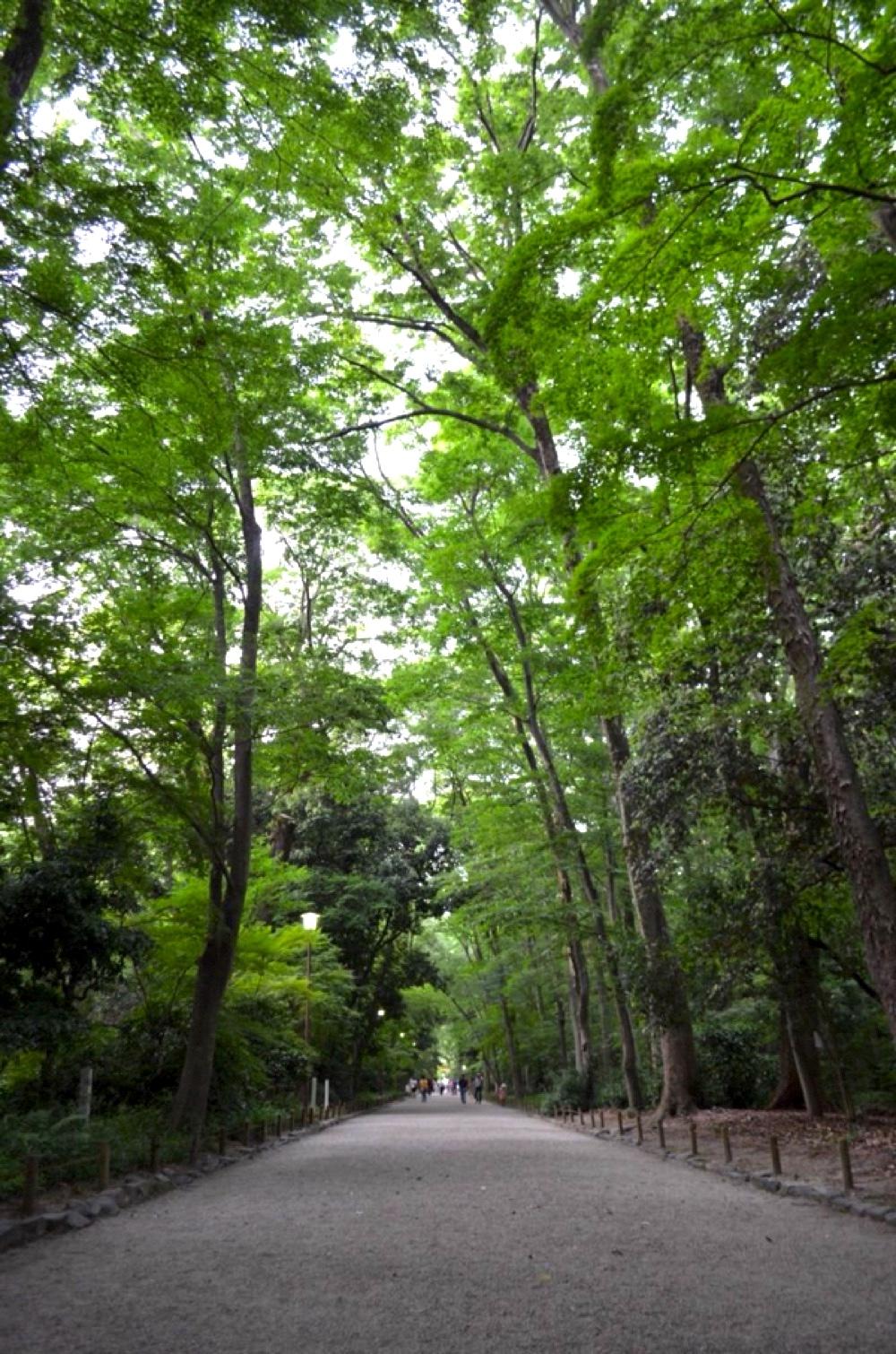 神秘的な糺の森