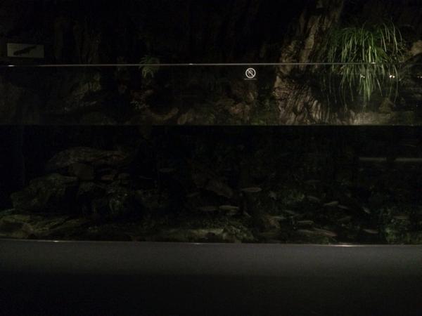 京の川ゾーンも真っ暗!