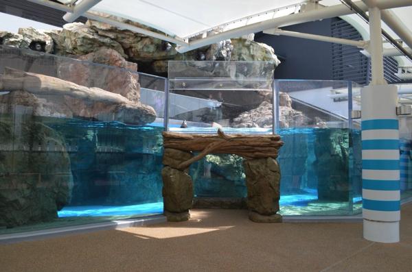 ミナミアメリカオットセイのプール