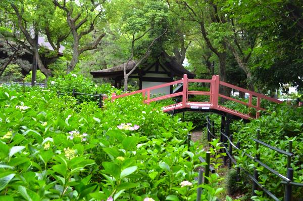 第二紫陽花苑にある橋