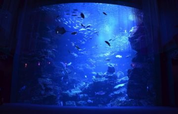 いろいろな種類の生き物がいるメイン水槽