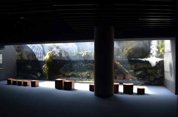 由良川を再現した水槽