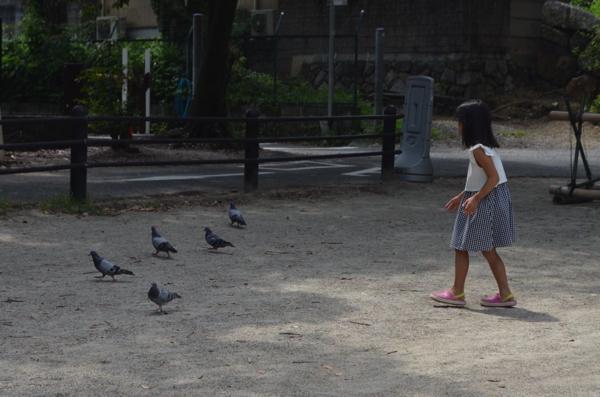 ハトに気づかれないように近づく娘