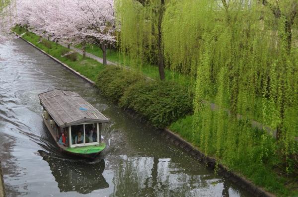 京都・伏見のお花見は情緒あふれる宇治川派流・濠川を「十石舟」で。 | ごりらのせなか