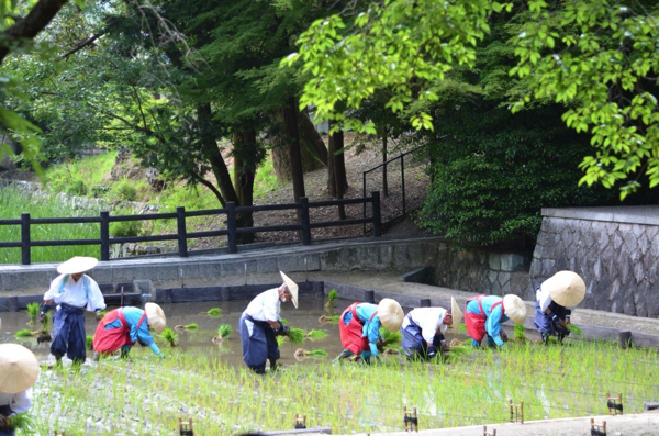 6月10日の田植祭