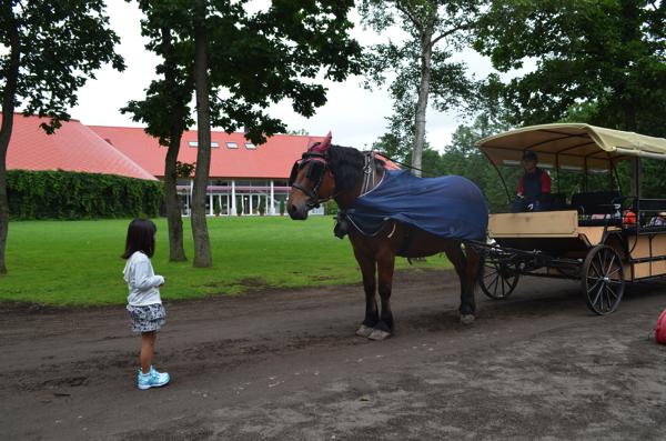 馬と向き合う娘