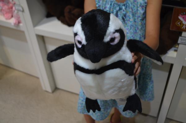 ケープペンギンのぬいぐるみ(Mサイズ)
