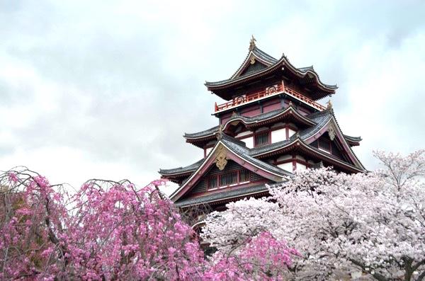 [京都の桜]伏見桃山城は子ども連れのお花見におすすめのスポット! 自撮りポイントも!? | ごりらのせなか