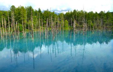 青い池は圧巻!
