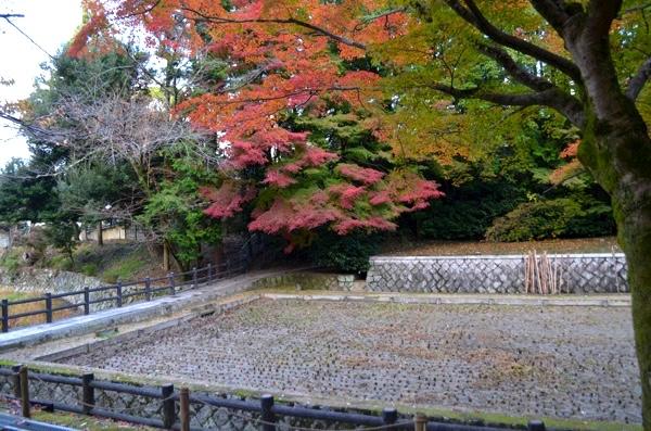 神田の紅葉(撮影:2017年11月19日)