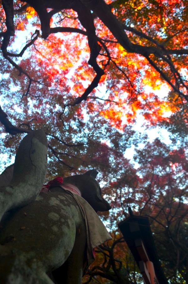 きつね像と紅葉を見上げる(撮影:2017年11月19日)