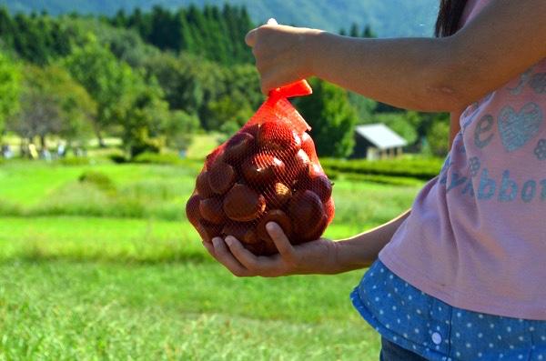 [滋賀]マキノカントリーフェスタで秋の味覚を楽しみ、大自然を満喫しよう!! | ごりらのせなか