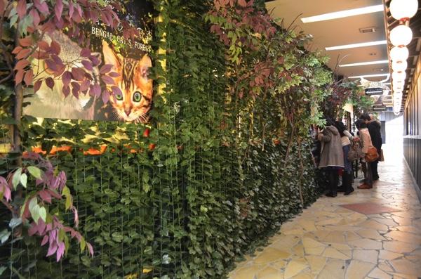 「京都ひょう猫の森」には行列が!?