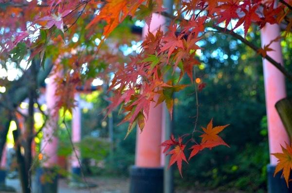 稲荷山の紅葉もきれい!