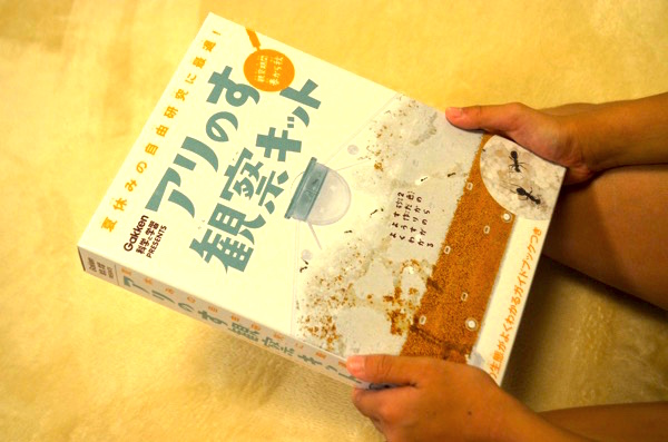 「アリの巣づくり観察」は小学生低学年向けの自由研究におすすめ! ついでに大人も癒されるぅ〜! | ごりらのせなか
