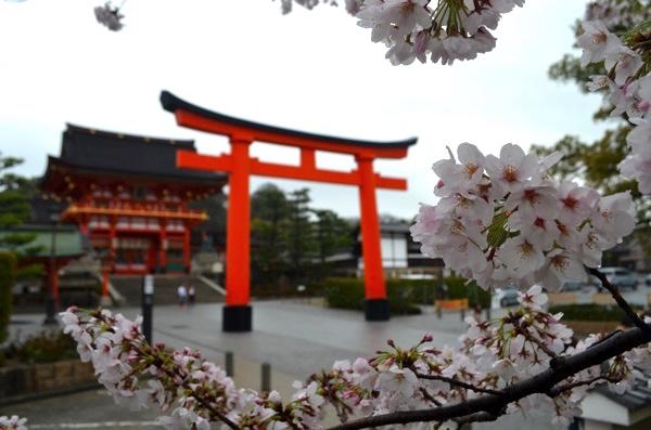 伏見稲荷は桜の名所? 朱色の鳥居やきつね像と桜がいっしょに写る撮影ポイント紹介します! | ごりらのせなか