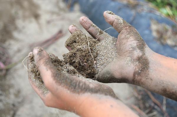 「あらす観光いも掘り農園」の土