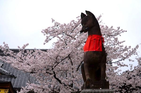 春には桜も美しい!