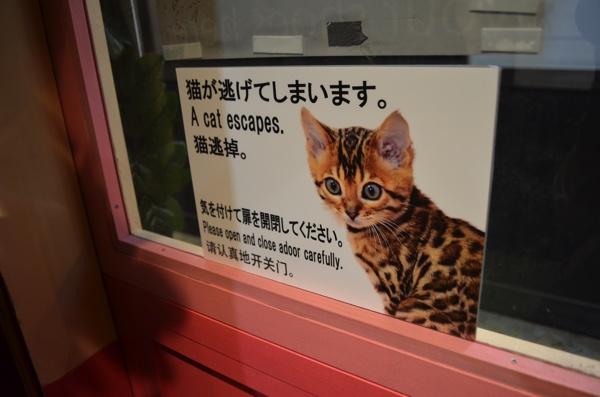 猫が逃げないように二重扉になっている