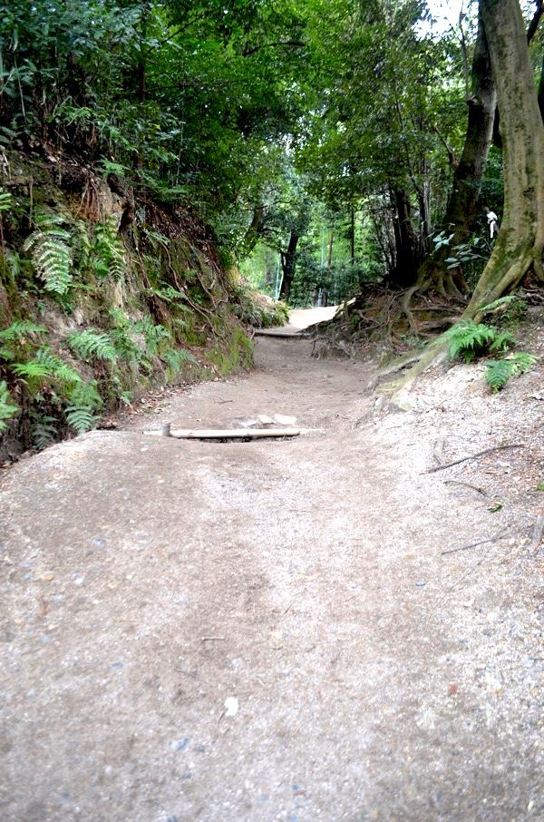 伏見神宝神社への道