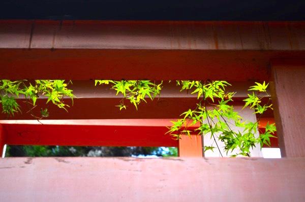 鳥居の朱色と緑色の紅葉のコントラスト