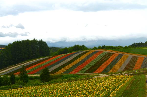 年間およそ30種類もの花が咲き誇る