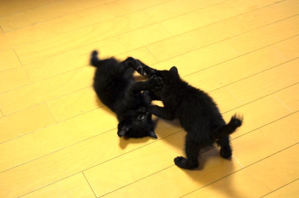 捨てられていた仔猫たち