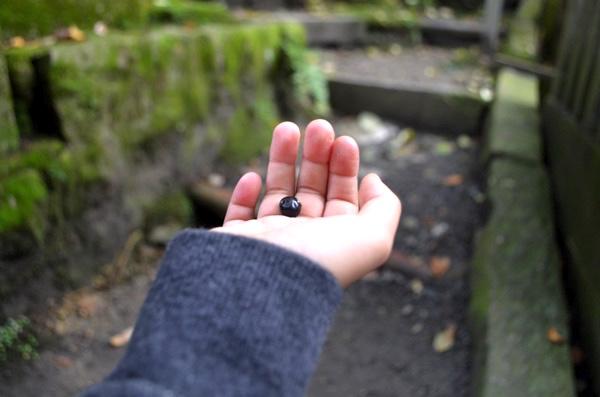 黒い木の実も発見!!