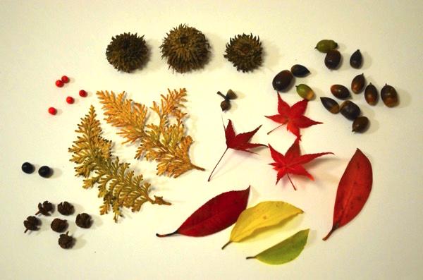 秋の山には「宝物」がたくさん!