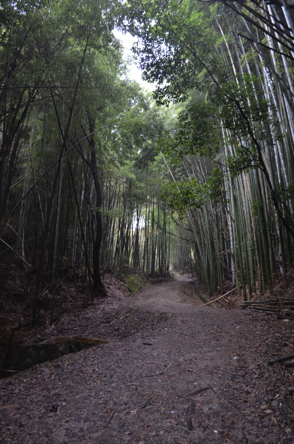 竹林の道を進む