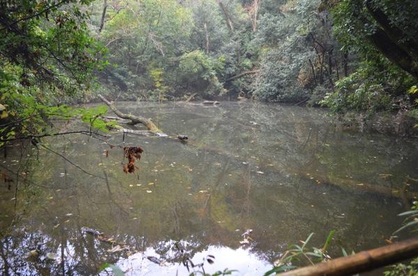 大岩山にある池