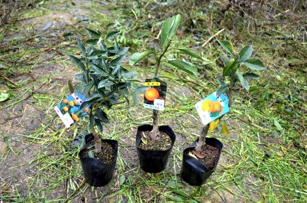 樹木は参加者が持参する