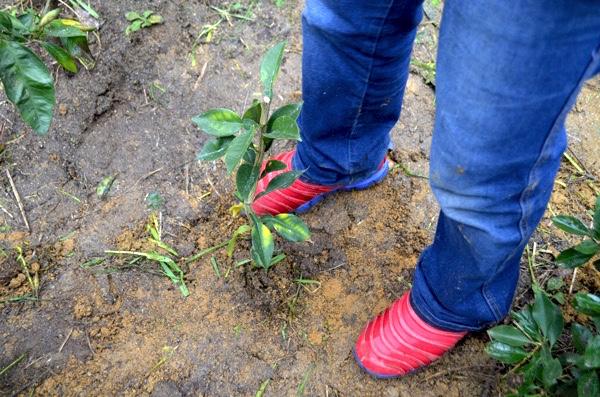 土を固める