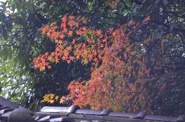 きれいな紅葉も