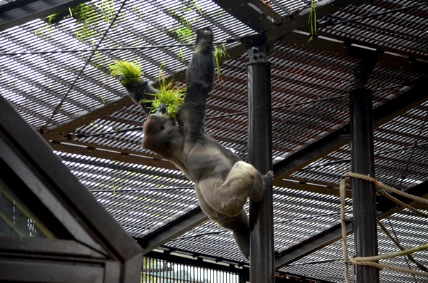 モモタロウの採食活動
