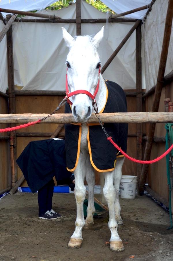 境内に真っ白な馬が!