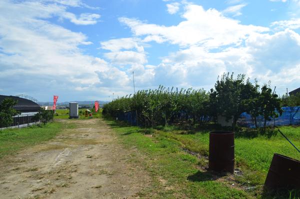 梨狩り園へと続く道