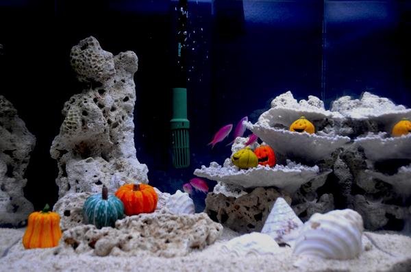 ハロウィーンカラーの魚!?