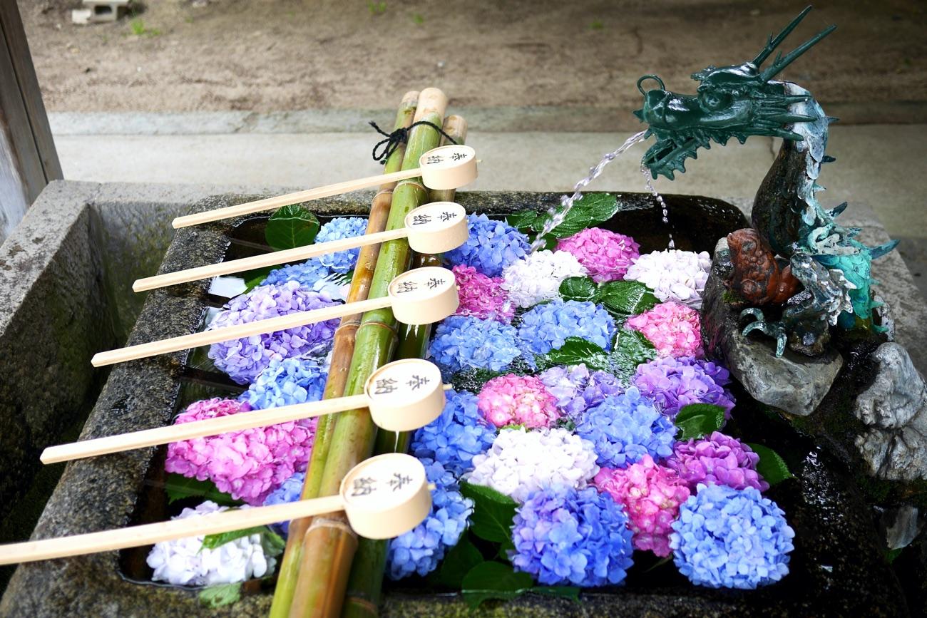 手水鉢に浮かぶあじさいの花