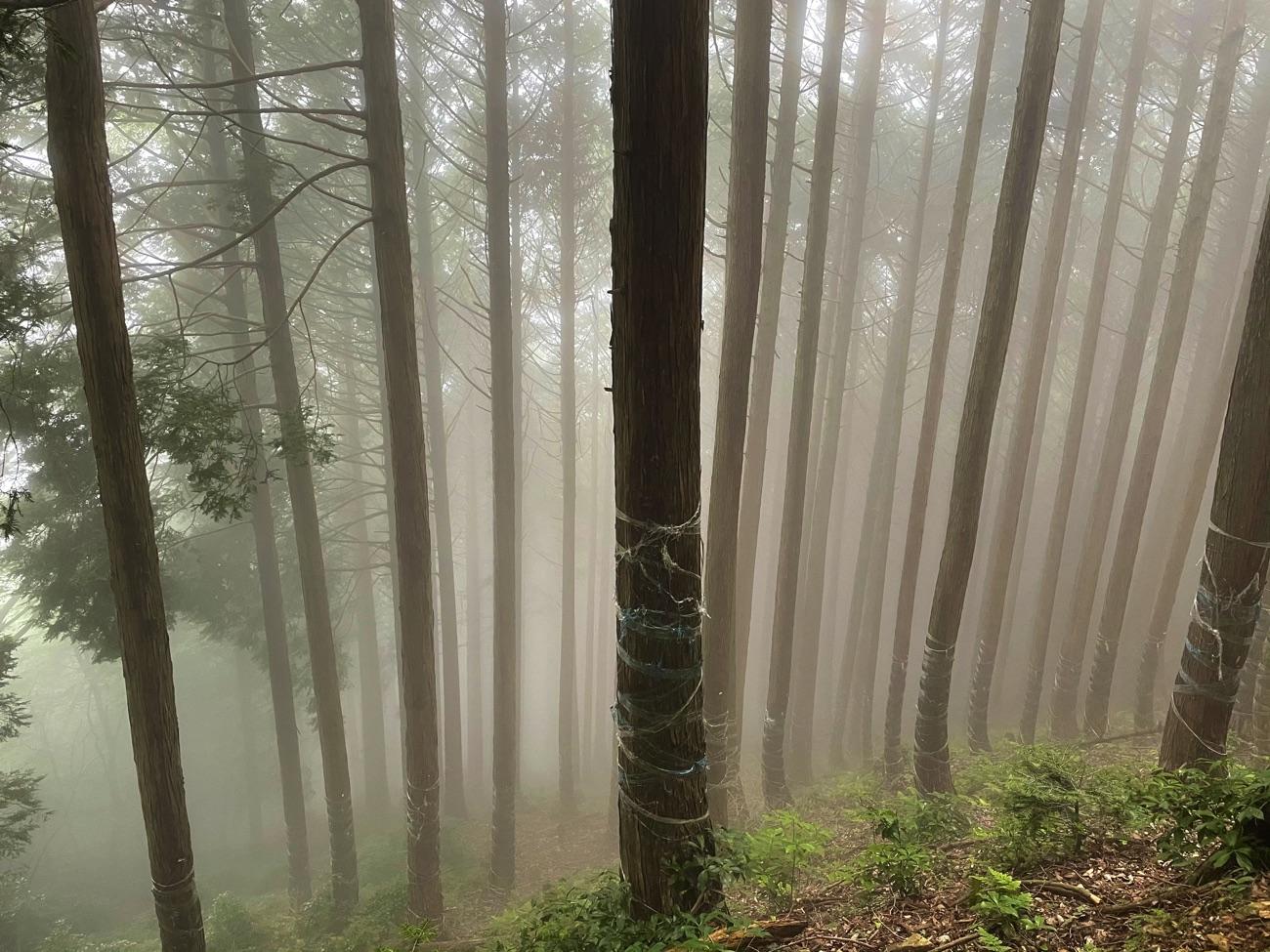 霧が深くなった!