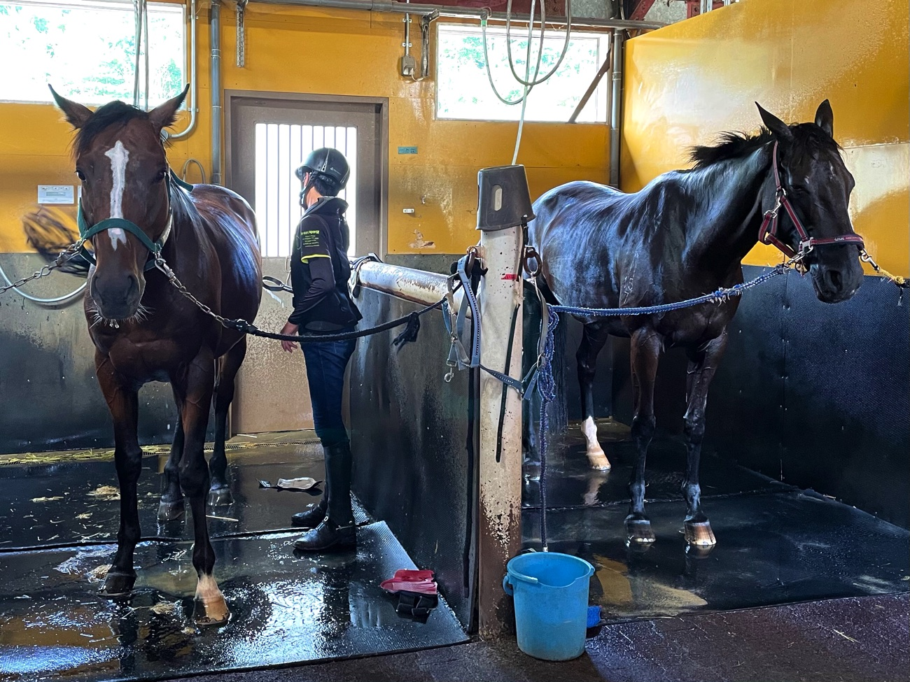 馬にかかわる仕事を目指すことができる