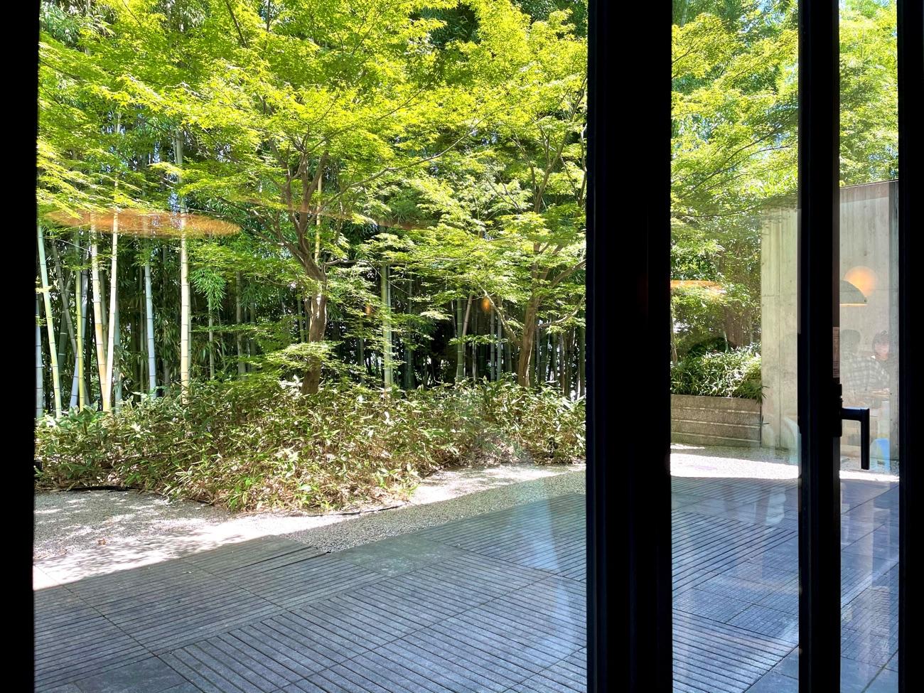 キラキラと輝く竹林