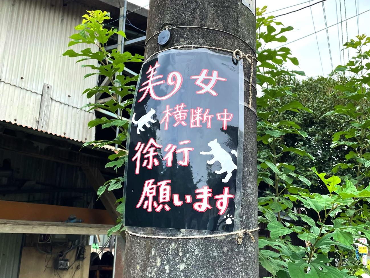 「美女横断中」のポスター