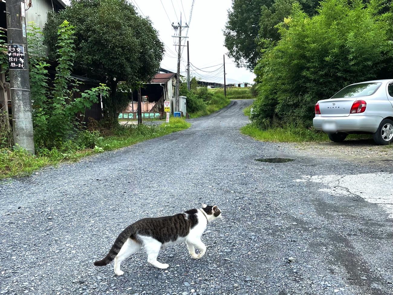 道路を横断する猫