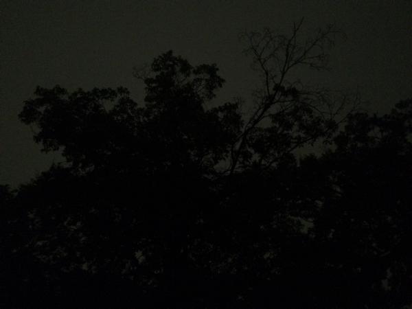 夜の清水谷家の椋
