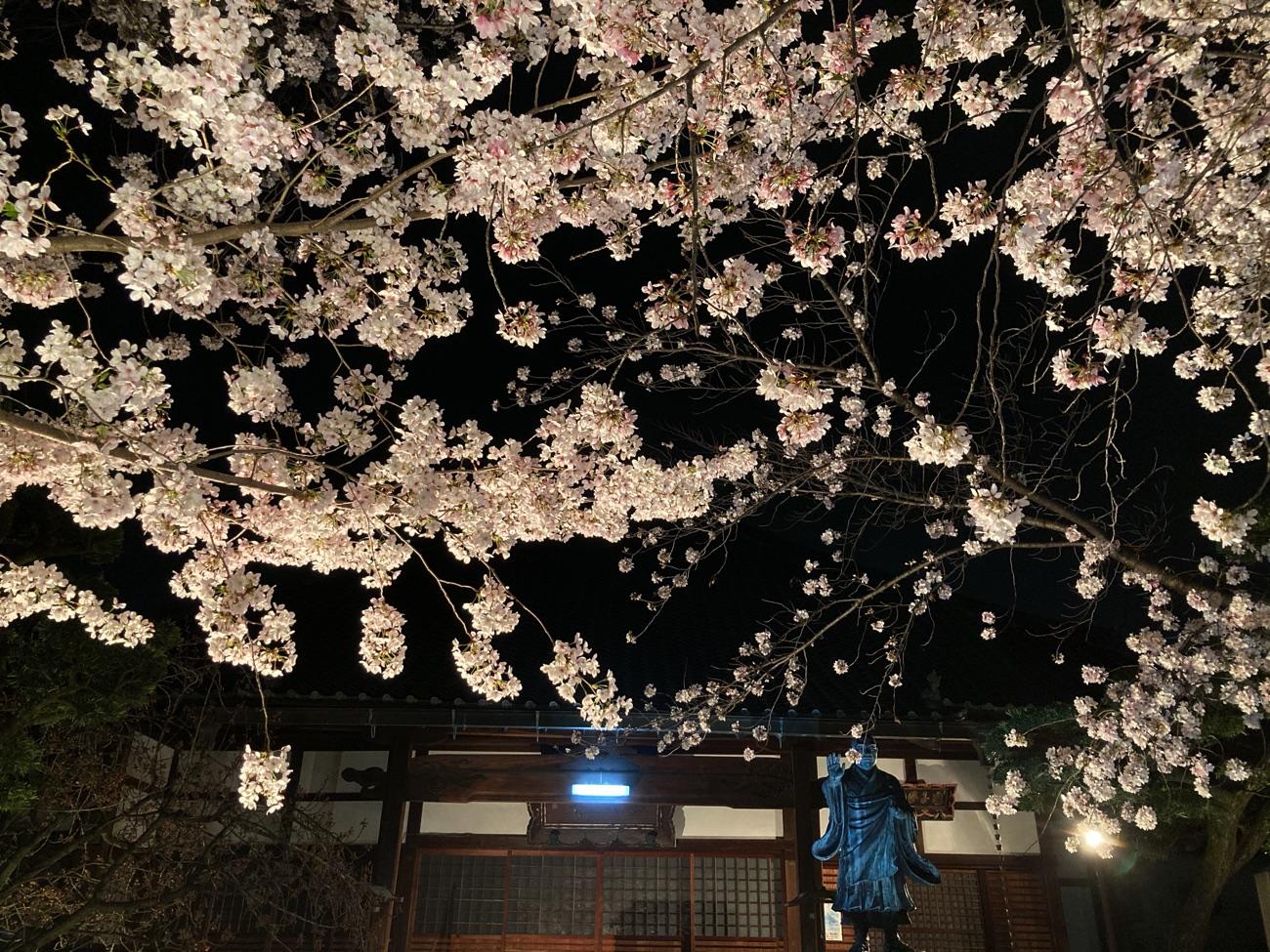 墨染寺のライトアップ